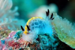 Nudi from Nosy Be by Ugo Gaggeri 
